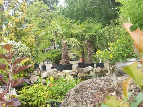 palmak disznovenyek kerti to elott kerteszet