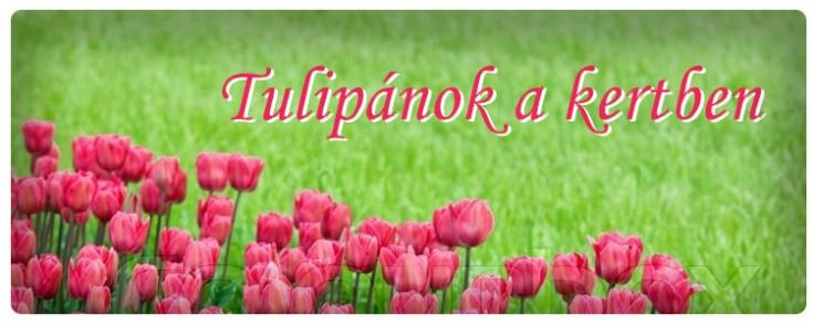 head tulipanok