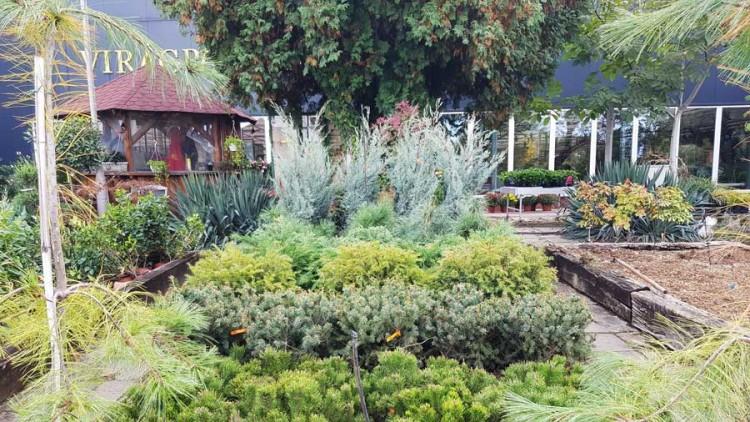 uj novenyek dizsnovenyek bokrok kerti centrum